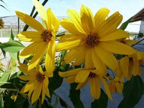 Bunte Blumen: Einfach Natur pur