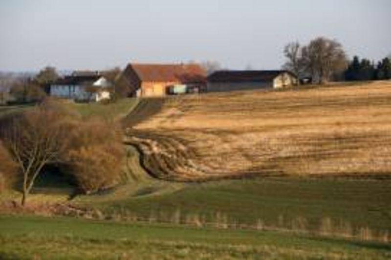 Steinhiebl